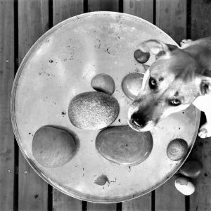 Multipurpose water tray.